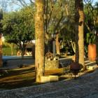 jardines-hacienda-ballemari-entrada